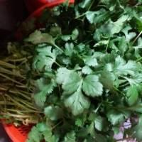昨天朋友给我送来一大袋自家种的蔬菜,有油麦菜,白菜,香菜,但不知-图1