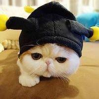黑色的凯蒂猫