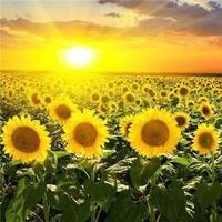 向阳花2020-5
