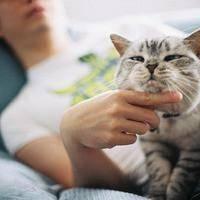 邻家小胖猫