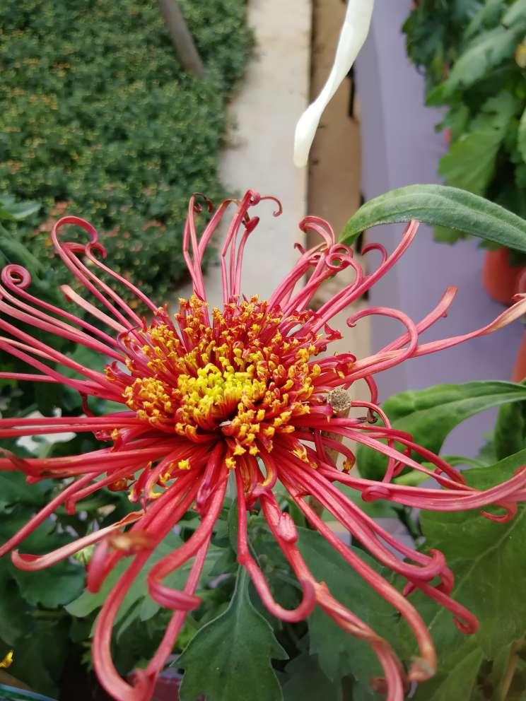 低调的花儿