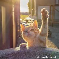 猫猫513