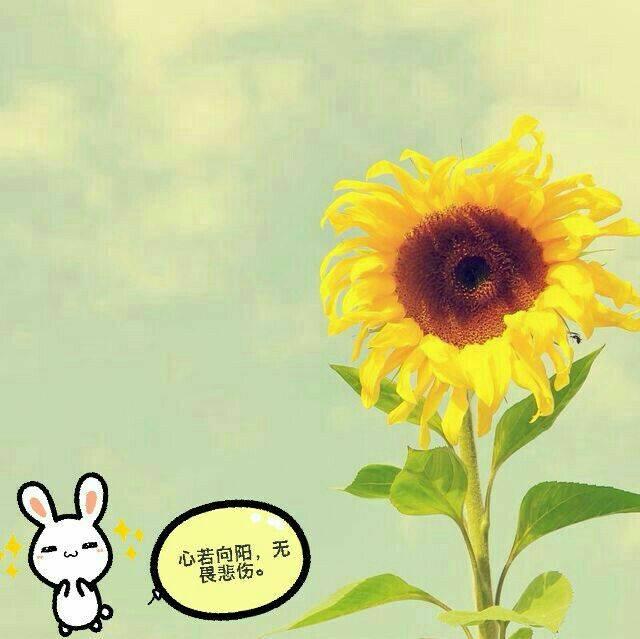 ^o^微笑向暖^o^